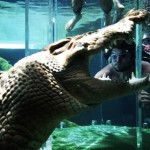 Crocosaurus Cove: The Cage of Death Darwin, Australia