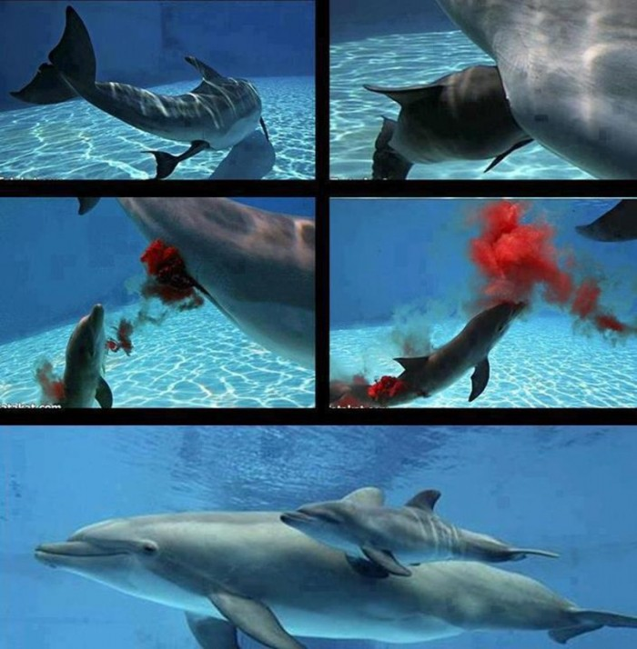 Facts About Pregnancy And Birth Of Dolphins  Facts List